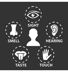 5 senses vector