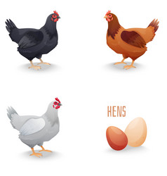 Set of hens different breed with eggs isolated vector