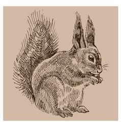 Vintage squirrel vector