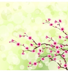Cherry tree blossoms vector