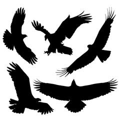 Eagle silhouette vector