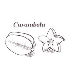 Engraving carambola vector