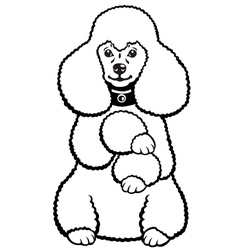 Poodle black and white vector