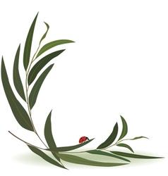 Ladybird and eucalyptus vector