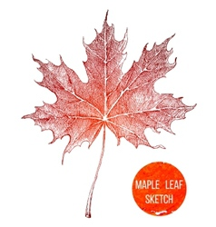 Hand drawn maple leaf vector