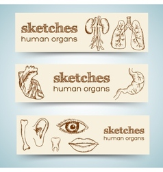 Human organs in sketches style set vertical vector