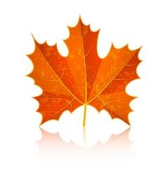 Autumn dry maple leaf vector