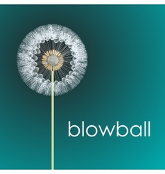 Blowball vector