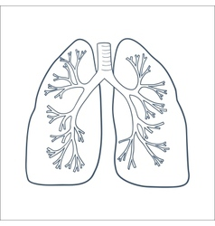 Anatomical lungs isolated on white vector