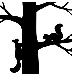 Two squirrel on the tree vector