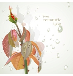 Rosebud with a field for your lyrics romantic vector