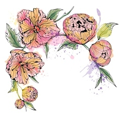 White background with watercolor peony flowers vector