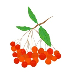 Ashberry vector