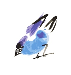 Watercolor drawing bird robin at white background vector