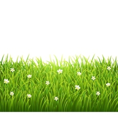 Green isolated grass with flowers on white vector