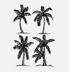 Palm tree tropical palm trees black silhouettes b vector