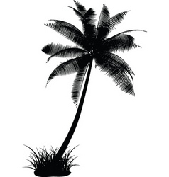Palm tree design vector