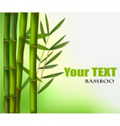 Bamboo background vector