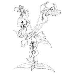 Drawing field flower vector