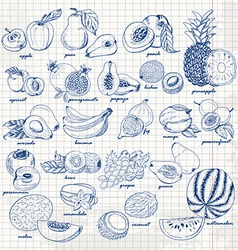 Set of fruits on paper hand drawing sketch vector
