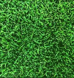 Grass texture vector