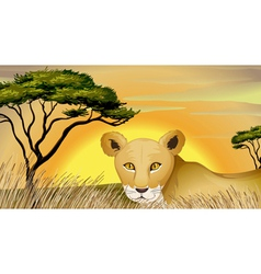 A tiger in nature vector