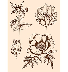 Vintage hand drawn flowers vector