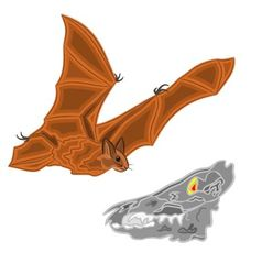 Halloween bat and skull vector