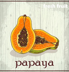 Hand drawing of papaya fresh fruit sketch vector