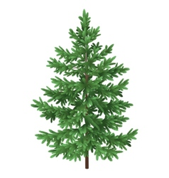 Christmas green spruce fir tree isolated vector