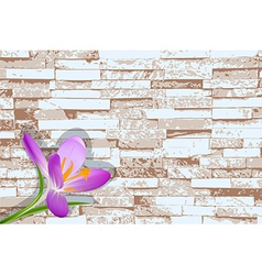 Blooming crocus on a background of a brick wall vector