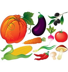 Vegetable set vector