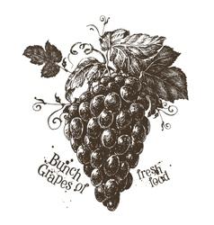 Bunch of grapes logo design template fresh vector