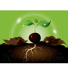 Green sprout growing from seed vector