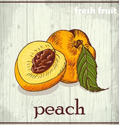 Hand drawing of peach fresh fruit sketch vector
