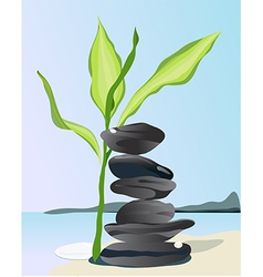 Bamboo plant and black stones on beach vector