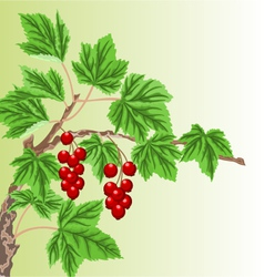 Twig garden currant bushes with red berries vector