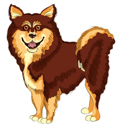 Dog lapphund breed smiling vector