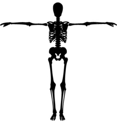 Skeleton vector