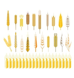 Ears of wheat and cereals symbols vector