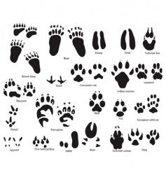 Animal trails prints vector
