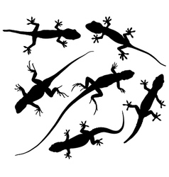 Lizard silhouette vector