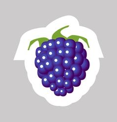Blackberry vector