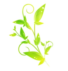 Green sprout vector