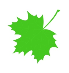 Green maple leaf vector