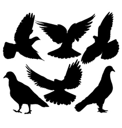 Pigeon silhouette vector