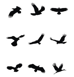 Bird silhouette set vector