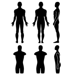 Male mannequin outlined silhouette torso vector