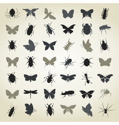 Collection of insects4 vector