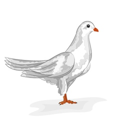 White dove white pigeon symbol peace vector